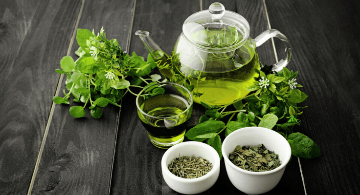 green tea rich in anti oxidants for younger skin