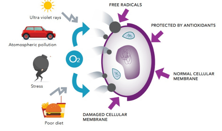 what causes free radicals in the body